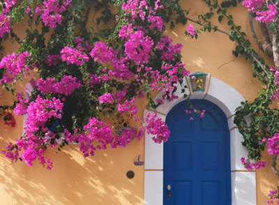 Bougainvillaea in Assos